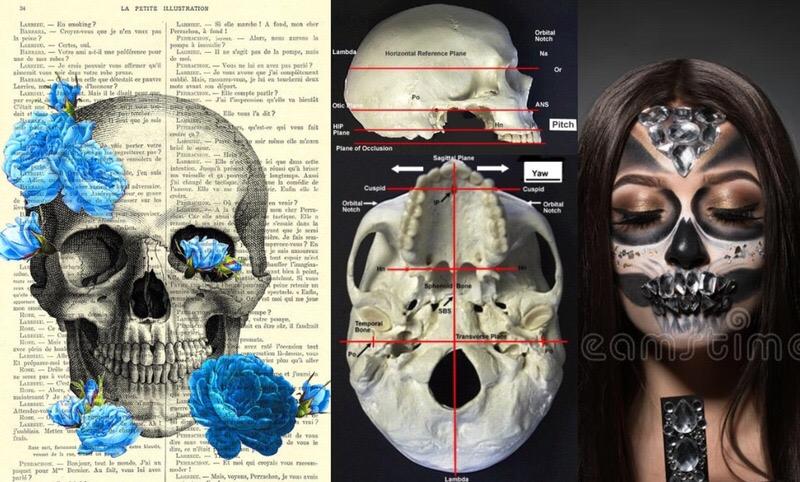 Биомеханика черепа и стоматология