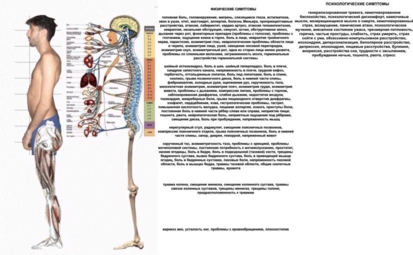 На что окклюзия влияет в организме